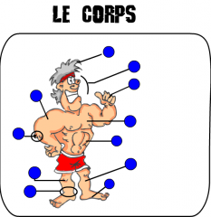lexique,fle,apprenant,corps,vocabulaire