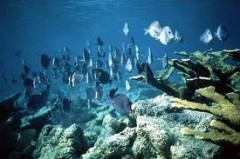 océan,environnement,fle,compréhension orale,son,fichier,b1